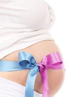 The Pregnancy Timeline